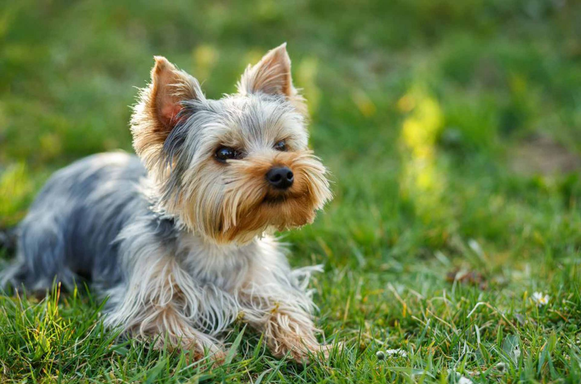 Mobile Dog Grooming in Sheffield
